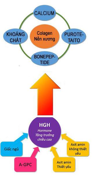 GH-Creation - phương pháp hỗ trợ tăng chiều cao an toàn