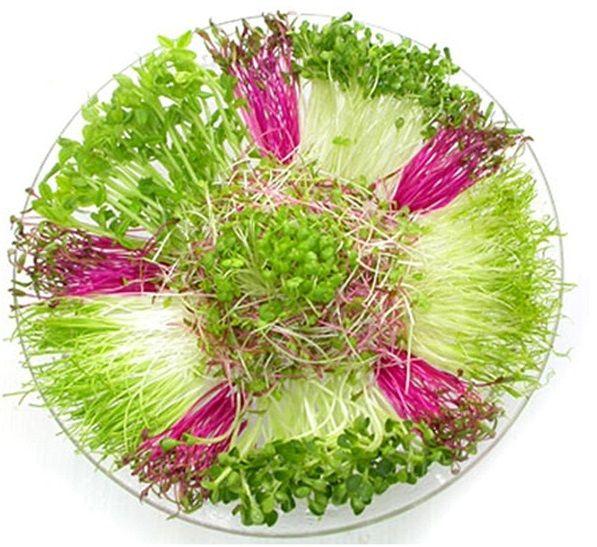 Máy trồng rau mầm Magic Home Làm ra rau sạch (Giá đỗ, các loại rau mầm...) trong thời gian từ 2 - 3 ngày