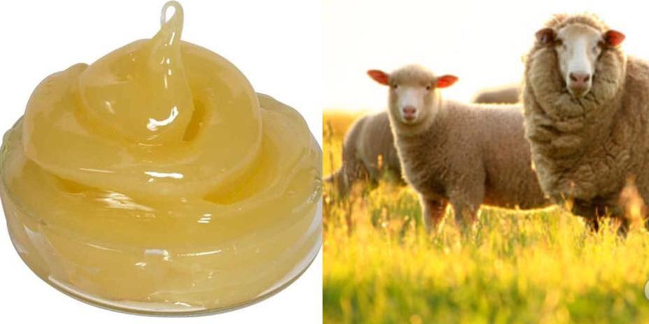 Kem được chiết từ 100% Lanolin mỡ cừu tự nhiên