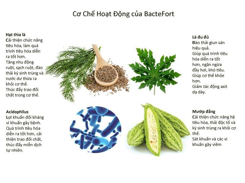 Thành phần Bactefort