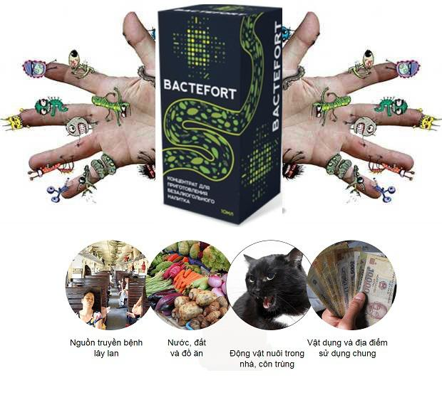 Các nguồn lây truyền ký sinh trùng ở xung quanh chúng ta, Bactefort giúp hỗ trợ diệt ký sinh trùng hiệu quả