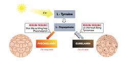 Viên Uống Hỗ Trợ Trắng Da Neuglow C Cao Cấp Dạng Sủi Mua 2 Tặng 1