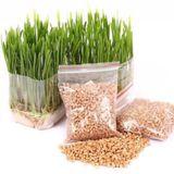 Hạt giống cỏ cho mèo hỗ trợ giảm búi lông