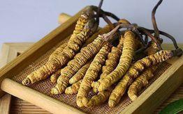 Đông trùng hạ thảo là gì? Tác dụng của đông trùng hạ thảo
