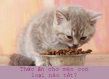 Thức ăn cho mèo con loại nào tốt? Review các loại thức ăn cho mèo con tốt nhất