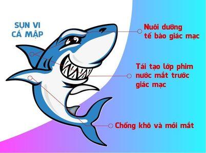 Sụn vi cá mập loại nào tốt? Top 5 sản phẩm bạn nên sử dụng