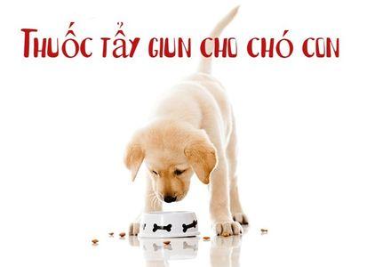 Thuốc tẩy giun cho chó con và những lưu ý khi sử dụng