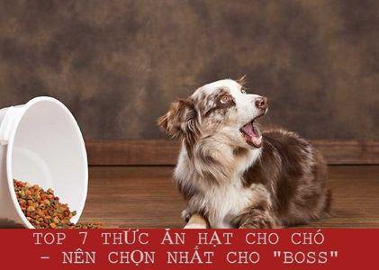 """TOP 7 thức ăn hạt cho chó tốt nhất nên chọn cho """"BOSS"""""""