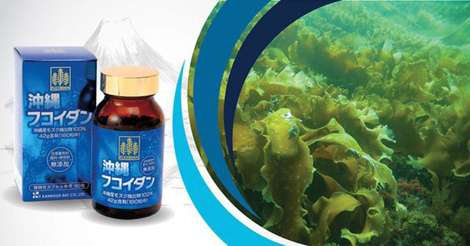 [ĐÁNH GIÁ] Fucoidan Okinawa Nhật Bản: có tốt không, công dụng và giá bán là bao nhiêu?