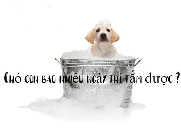 [Giải Đáp] Chó con bao nhiêu ngày thì tắm được ?