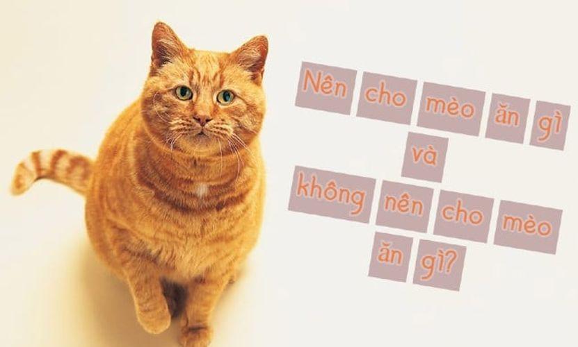 Nên cho mèo ăn gì và không nên cho mèo ăn gì? Thức ăn yêu thích của mèo