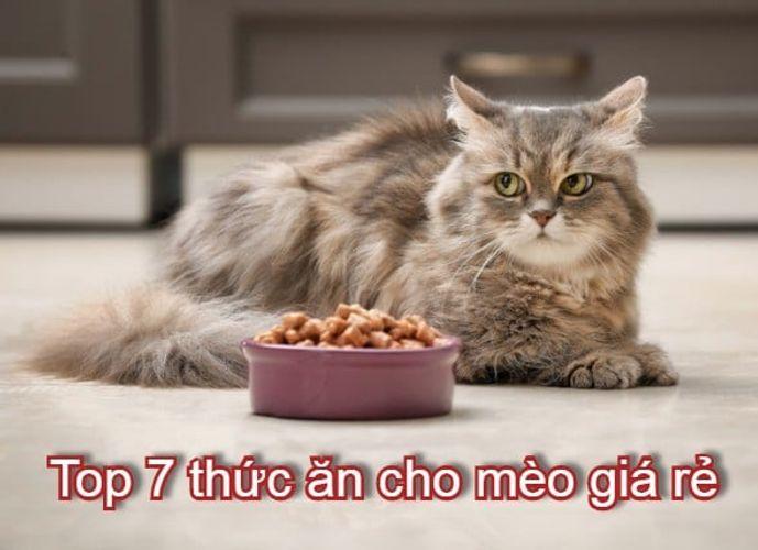 Top 7 Sản phẩm thức ăn cho mèo giá sỉ