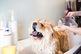 Voucher Tắm Vệ Sinh Trọn Gói Cho Chó Mèo Lông Dài 20kg Tới 25kg