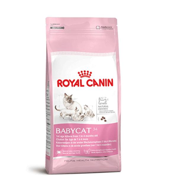 Thức Ăn Hạt Cho Mèo Từ 1- 4 Tháng Royal Canin Baby Cat