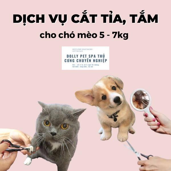 Voucher Cắt Tỉa Và Tắm Trọn Gói Cho Chó Mèo 5 Đến 7kg