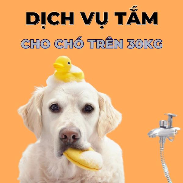 Voucher Dịch Vụ Tắm Cho Chó Trên 30kg Theo Chuẩn Spa