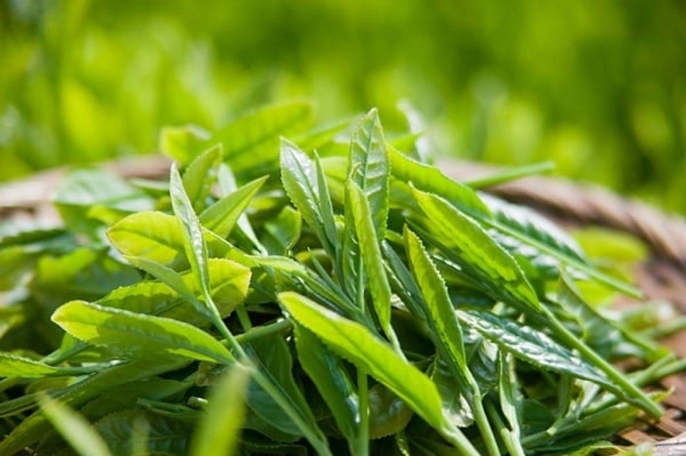 Sữa Rửa Mặt Trà Xanh Dabo Green Tea Cao Cấp 180ml