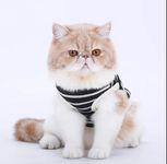 Dành cho mèo