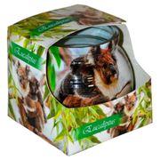 Ly nến thơm tinh dầu Admit 85g QT01883 hương bạch đàn